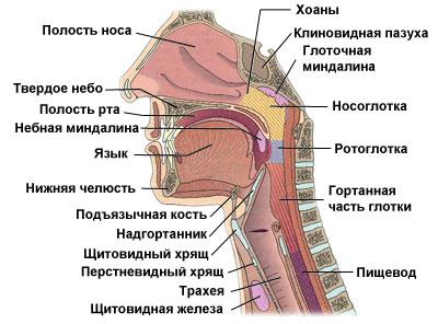аллергия в гортани фото и симптомы